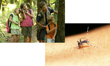 picture of a mosquito biting open skin and kids in the forest
